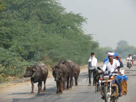 On the road to Ranthambore